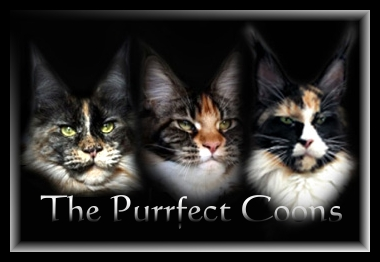 The Purrfect Coons