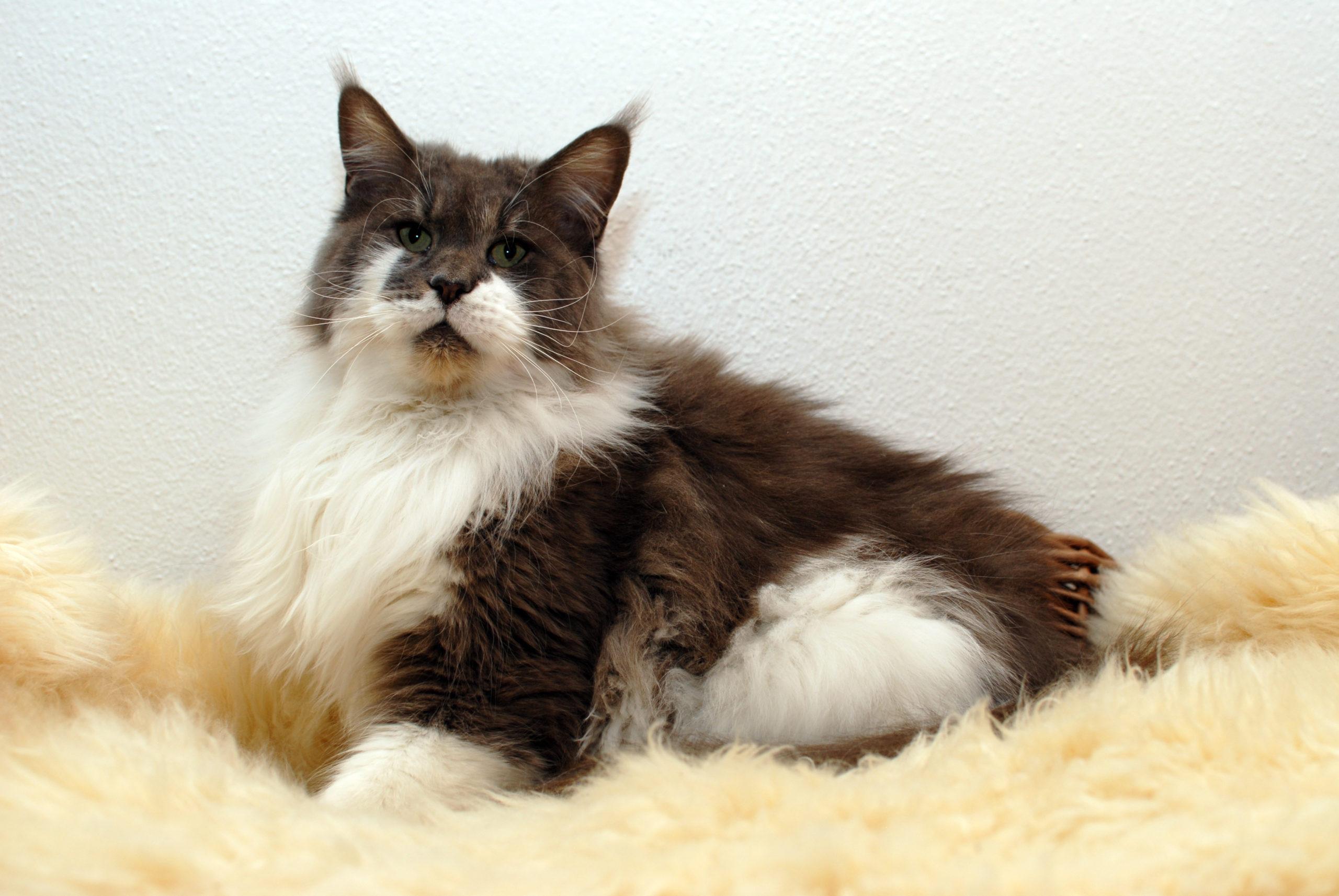Chloe – 4,5 Jahre